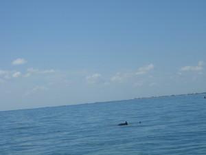 De enige foto met dolfijnen die gelukt is