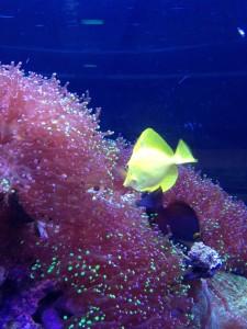 Visje van Nemo